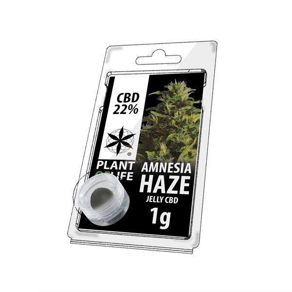 Résine 22% CBD de Amnesia Haze – Plant of Life® (Boite de 10pcs)